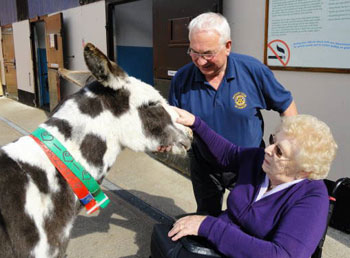 Old Folks Outing to Donkey Sanctuary